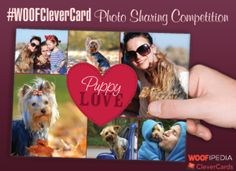 Pet Photo Sharing Competition starting today  By WOOFipedia and CleverCard, read more details, http://beagledaily.com/woofipedia-clevercards-pet-photo-sharing-competition/  #WOOFCleverCard