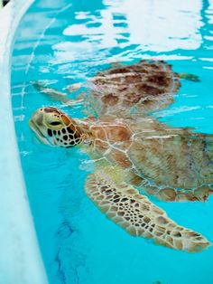 Turtle Hospital in The Florida Keys                                                                                                                                                                                 More