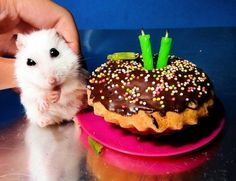 """In case you were curious about where the term """"party animal"""" came from."""