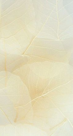 Hintergrund beige delicate textures and tone in tone colors Nature Iphone Wallpaper, Aesthetic Iphone Wallpaper, Free Wallpaper Backgrounds, Beige Wallpaper, Screen Wallpaper, Textures And Tones, Textures Patterns, Aesthetic Backgrounds, Aesthetic Wallpapers