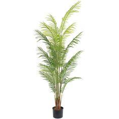 2M Artificial Hawaii kwai Palm Tree 14 Leaves Small Palm Trees, Small Palms, Hawaii, Leaves, Plants, Plant, Hawaiian Islands, Planets