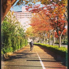 Autumn morning walk Higashi Ojima Tokyo 13-Nov http://ift.tt/2eJMIDi #japan_daytime_view #nature_archive #phos_japan #ig_japan #bestjapanpics #icu_japan #bestjapanpics #gf_nature #wp_japan @icu_japan @japan_daytime_view @_photo_japan_  @art_of_japan @instagramjapan @wp_japan @japan_of_insta @lovers_nippon #nature_brilliance #ig_myshot #tv_nature #ig_color #rsa_nature #outdoors #bestnatureshots @team_jp @leaveonlyleaves @igersjp