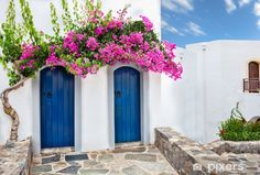 Colourful tropical purple bougainvillea creeper flowering over two blue doors on a whitewashed villa typical of Mediterranean architecture b. Bougainvillea Trellis, Homemade Hummingbird Food, Greek Paintings, Spanish Garden, Unique Doors, Wooden Doors, Creepers, Outdoor Walls, Pink Aesthetic