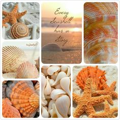 Every seashell has a story . #moodboard #collage #summer