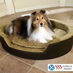itu0027s a cooled and heated dog bed perfect for older pets with joint or muscle - Heated Dog Bed