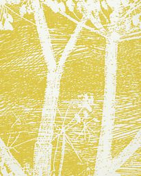 Tapet Cow Parsley White/ Yellow från Cole & Son
