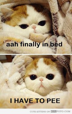 Finally in bed...