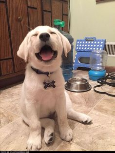 such-a-cute-happy-doggy