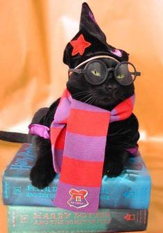 magic cat cuteee!