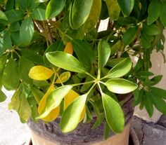 Rimedi ecologici fai da te per piante