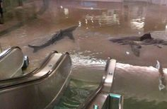 Sharks in mall