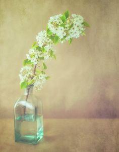 Blossom - 11 x 14 Fine Art Photograph.  jessicatorres  $40