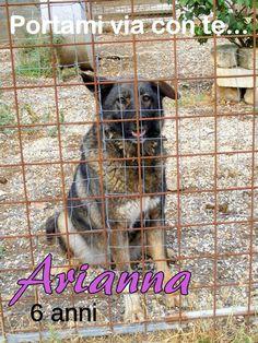 Arianna - 6 anni #portamiviaconte #DogsHostel