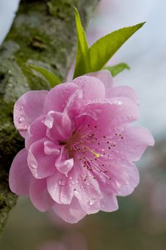 Delicate fleur d'arbre fruitier                                                                                                                                                     Más                                                                                                                                                                                 Más…