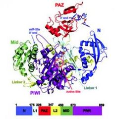 Discover protein expression purification and analysis ideas on researchers solve structure of human protein critical for silencing genes fandeluxe Images