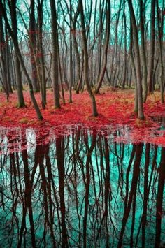 | tree reflection in turquoise and rust via Angela...