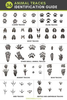 Best bushcraft skills that all survival hardcore will most likely want to master right now. This is most important for wilderness survival and will certainly defend your life. Coyote Tracks, Deer Tracks, Bobcat Tracks, Deer Hunting Tips, Coyote Hunting, Pheasant Hunting, Archery Hunting, Hunting Quotes, Camping Survival