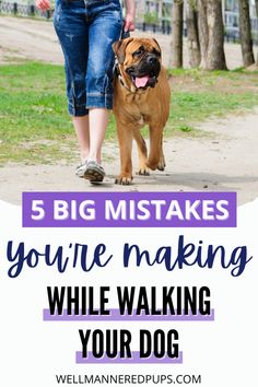 Dog walking tips - The 5 biggest mistakes dog owners make on walks.