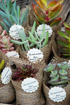 succulent favor Plant Wedding Favors, Succulent Favors, Pots, Cactus, Wedding Flowers, Succulents, Creations, Weddings, Gift
