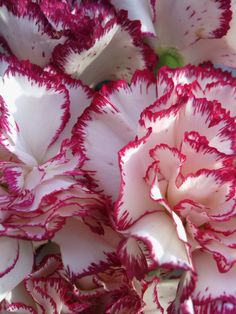 Carnations  ... love that smell