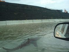 Besides the destruction of hurricane Sandy, how about a shark swimming down your street.