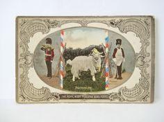 1910 Royal Welsh Fusiliers Regimental Goat Color Photo Postcard Ettlinger