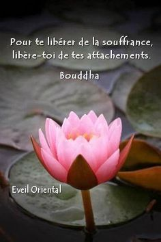 Pour te liberer de la souffrance libere-toi de tes attachements ~ Free yourself of suffering by freeing yourself of attachments. Positive Energy Quotes, Positive Attitude, Positive Thoughts, Insightful Quotes, Inspirational Quotes, Wisdom Quotes, Me Quotes, Mantra, Quote Citation