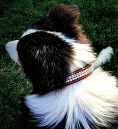 Swarovski Crystallized Suede Dog Collars