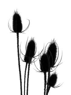 plant silhouettes | Crafty | Pinterest | Silhouette, DIY home and ...