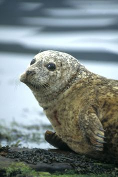 This little guy is a common sight off the Isle of Berneray! Beautiful Creatures, Animals Beautiful, Animal Of Scotland, Baby Animals, Cute Animals, British Wildlife, Sea Otter, Sea And Ocean, Fauna