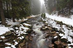Schwarzwassertal im Nebel - Naturfotosammlung