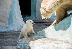 Hey Mom! Pthlpthbbbbt http://ift.tt/2fHqXEM