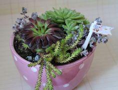 Splendid Succulents