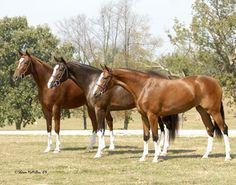Beautiful horses and matching stockings!