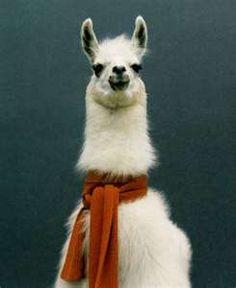I am a llama!