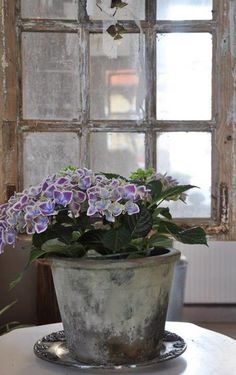 A rustic window and pot of flowers ... <3