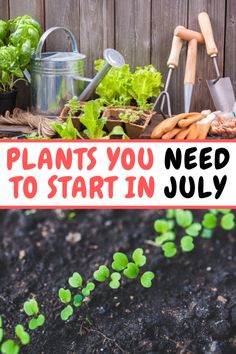 Discover the best plants for your very own backyard vegetable garden. Check out our article that shows you the easiest plants to get started. Backyard Vegetable Gardens, Potager Garden, Veg Garden, Garden Beds, Garden Plants, Outdoor Gardens, Pot Plants, Bonsai Garden, Outdoor Plants