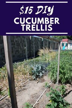 Perennial Flower Gardening - 5 Methods For A Great Backyard Learn How To Make This 15 Diy Cucumber Trellis For Your Vegetable Garden. This Simple Cucumber Trellis Is Easy To Build And Great For Any Backyard Garden Space. Planting Vegetables, Organic Vegetables, Growing Vegetables, Growing Tomatoes, Veggies, Diy Trellis, Garden Trellis, Garden Netting, Trellis Ideas
