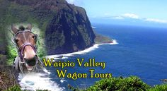 Waipio Valley wagon tour - pulled by a mule, beautiful valley and safe enough for our toddler. We got to eat some of the fruits growing wild in the valley and take home some of the beautiful flowers from the tour.