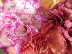 anjers in de woonkamer (1) Pretty Flowers, Beautiful Flowers