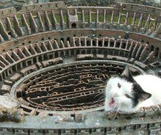Ahò, so er mejo der Colosseo! (Roma)