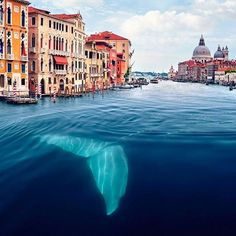 A whale in the Venice canal?! HA HA! Love this. Created by Robert Jahns.