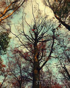 Forest Tree Photo Woods Autumn Woodland Enchanted by StudioYuki, $30.00