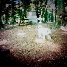 Canide di foresta