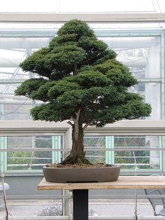 How to Succeed at Bonsai #Bonsai #Bonsai art| http://bonsai-art.lemoncoin.org
