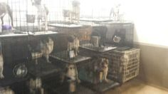 Animal advocates take aim at Boone County puppy mills