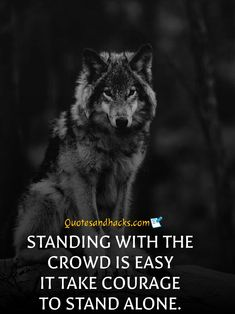 30 Lone wolf quotes that will trigger your mind - Quotes and Hacks