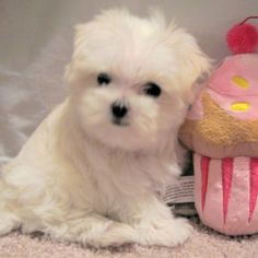 The cupcake makes this unbearably adorable.