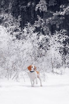 dog snow winter beautiful