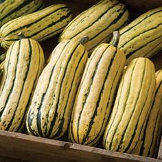 Winter Squash Guide   Co+op, welcome to the table Organic Vegetable Seeds, Organic Seeds, Organic Vegetables, Organic Gardening, Gardening Blogs, Gardening Vegetables, Ikea Garden Furniture, Buttercup Squash, Squash Bugs